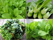 """Nhà đẹp - 5 loại rau quả nên bắt tay trồng """"ngay và luôn"""" tháng 5, 6 này"""