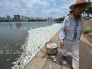Tin tức - Ảnh: Hơn 20 tấn cá chết trắng hồ ở Trung Quốc
