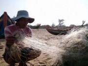 """Tin tức - """"Không có chuyện cá chết xếp lớp ở biển Quảng Bình"""""""