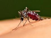 Tin tức - Một trường hợp tử vong do sốt xuất huyết tại TP. HCM