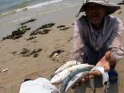 Tin tức - Đã xác định được 2 nhóm nguyên nhân gây cá chết hàng loạt