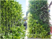 Nhà đẹp - Mê mẩn vườn treo rau sạch thông minh dành cho nhà chật