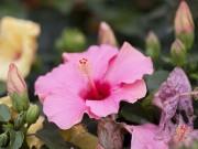 Nhà đẹp - 7 loài cây đẹp không nên trồng nếu không muốn hủy cả khu vườn