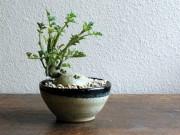 Nhà đẹp - Mê mẩn biến tấu bonsai trồng từ rau, củ, quả