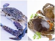Bếp Eva - Tuyệt chiêu chọn cua, ghẹ ngon mùa đi biển