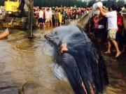 Tin tức - Lý giải nguyên nhân cá voi hơn 10 tấn mắc cạn ở Nghệ An