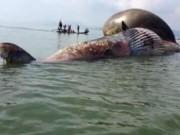 Tin tức - Người dân tiếc nuối đón chờ thi thể cá voi đưa vào bờ