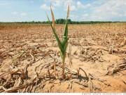 Tin tức - Cảnh báo: Khí hậu khắc nghiệt làm tăng độc tố trong thực phẩm