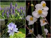 Nhà đẹp - Top loài hoa tuyệt đẹp nở rộ trong chậu nước tại nhà