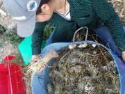Tin tức - Tôm hùm, cá chết hàng loạt ở vùng biển Phú Yên