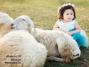 Bé gái gây sốt trong bộ ảnh Làm bạn với cừu ngoài đời còn xinh xắn, dễ thương hơn nhiều