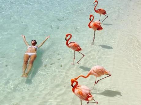 Nắng nóng kỷ lục, cùng đến thiên đường hồng hạc Aruba để tận hưởng ngay thôi