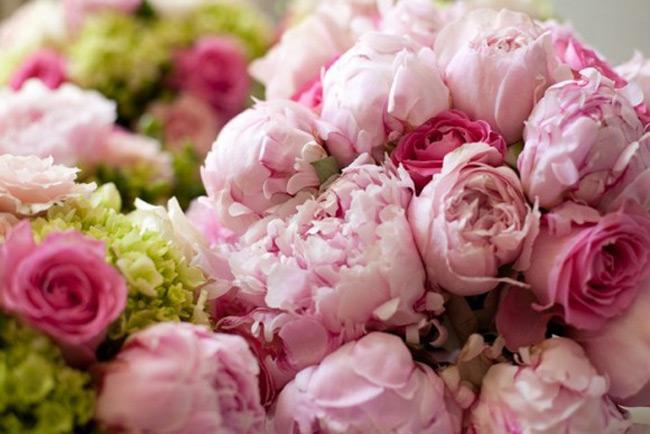 Hoa Mẫu Đơn là nữ hoàng của các loài hoa.