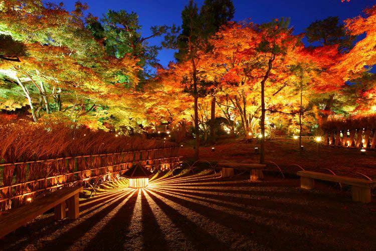Cảnh sắc của xứ sở mặt trời mọc trở nên rực rỡ hơn bao giờ hết từ tháng 9 đến tháng 11 hàng năm khi những rừng phong chuyển sắc từ xanh sang đỏ.