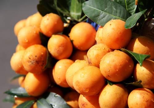 Thanh trà chín chấm muối ớt chinh phục tất cả chị em phụ nữ như rất nhiều loại trái cây chua chua được ưa chuộng xưa nay (Ảnh: Internet)