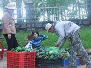 Mua sắm - Giá cả - Bơ Lâm Đồng được giá, nông dân mừng ra mặt