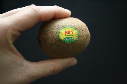 trong kiwi trong chau: mat nha ma suong mieng - 1