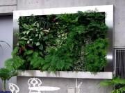 Nhà đẹp - Khắp thế giới phát sốt với trào lưu 'đào tường trồng cây'