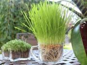 Nhà đẹp - Chế siêu đất trồng từ bỉm trẻ em cho cây lớn vùn vụt