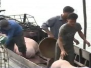 Tin tức - Lò giết mổ gia súc gây ô nhiễm nguồn nước trầm trọng