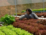 Nhà đẹp - Cận cảnh vườn rau thủy canh bạc tỉ ở Đà Lạt