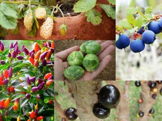 Mê mệt hạt giống cây tí hon: Cẩn thận nguy hiểm