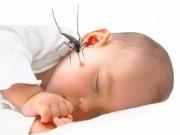 Tin tức cho mẹ - Cảnh báo dịch sốt xuất huyết gây tử vong ở trẻ dưới 5 tuổi