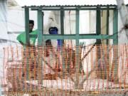 Tin tức - Giám đốc WHO: Sẽ không còn dịch Ebola từ cuối năm 2015