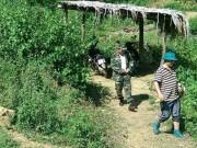 Vụ thảm sát ở Yên Bái: Dốc sức tìm hung khí