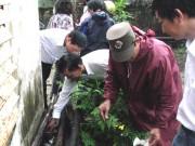 Tin tức - Đà Nẵng: Sốt xuất huyết vào mùa