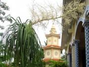 Nhà đẹp - Lạ lùng lan bình rượu nở hoa