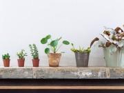 Nhà đẹp - 6 loài cây tuyệt đẹp giá rẻ cho nhà nhỏ thêm xinh