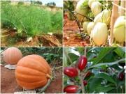 Nhà đẹp - Điểm mặt 6 loại rau quả độc, lạ xứ Đà Lạt