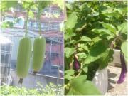 """Nhà đẹp - """"Đã mắt"""" với vườn rau trên sân thượng của mẹ Việt ở Đài Loan"""