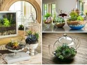 Nhà đẹp - Vườn nhỏ huyền diệu 'bỏ chút thời gian là có ngay'