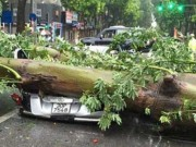 Dự báo bão sai: Những thông tin giật mình