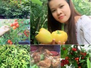 """Nhà đẹp - Mẹ Việt 9X trồng rau quả tốt um nhờ bã thuốc bắc """"thần thánh"""""""