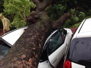 Tin tức - Bão Thần Sét đổ bộ hàng loạt cây đổ đè bẹp nhiều phương tiện