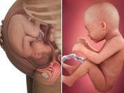 Bà bầu - Ảnh siêu âm 3D tuyệt đẹp về sự phát triển của thai nhi theo từng tuần (P.3)