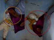 Clip Eva - Video: Phẫn nộ cảnh em bé bị giẫm đạp lên đầu một cách tàn nhẫn