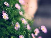 Nhà đẹp - Hà Nội giao mùa, tím sắc lưu ly