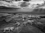 Tin tức - 10 bức ảnh động vật hoang dã đẹp nhất năm 2014