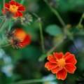 Tin tức - Hà Giang đẹp quyến rũ mùa hoa nở trên đá
