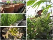 Nhà đẹp - Khu vườn tươi trẻ trên sân thượng trường ở Sài Gòn