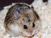 Nhà đẹp - 5 cách đơn giản mà hiệu quả đuổi chuột khỏi nhà