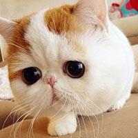 20 chú mèo nổi tiếng nhất trên internet