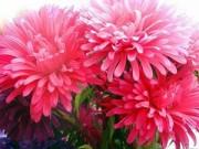 Cây cảnh - Vườn - Những loại hoa dễ trồng, dễ sống khi Đông đến