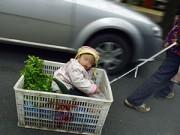 Nuôi con - Em bé hàng ngày nằm trong giỏ rau cùng bà đi bán hàng
