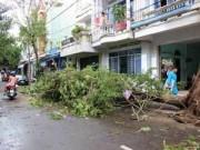 Phú Yên – Bình Định: Nhà sập, cây xác xơ sau bão số 4