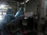 Tin tức - Quảng Ngãi: Phát hiện ổ dịch cúm A/H5N1, A/H5N6